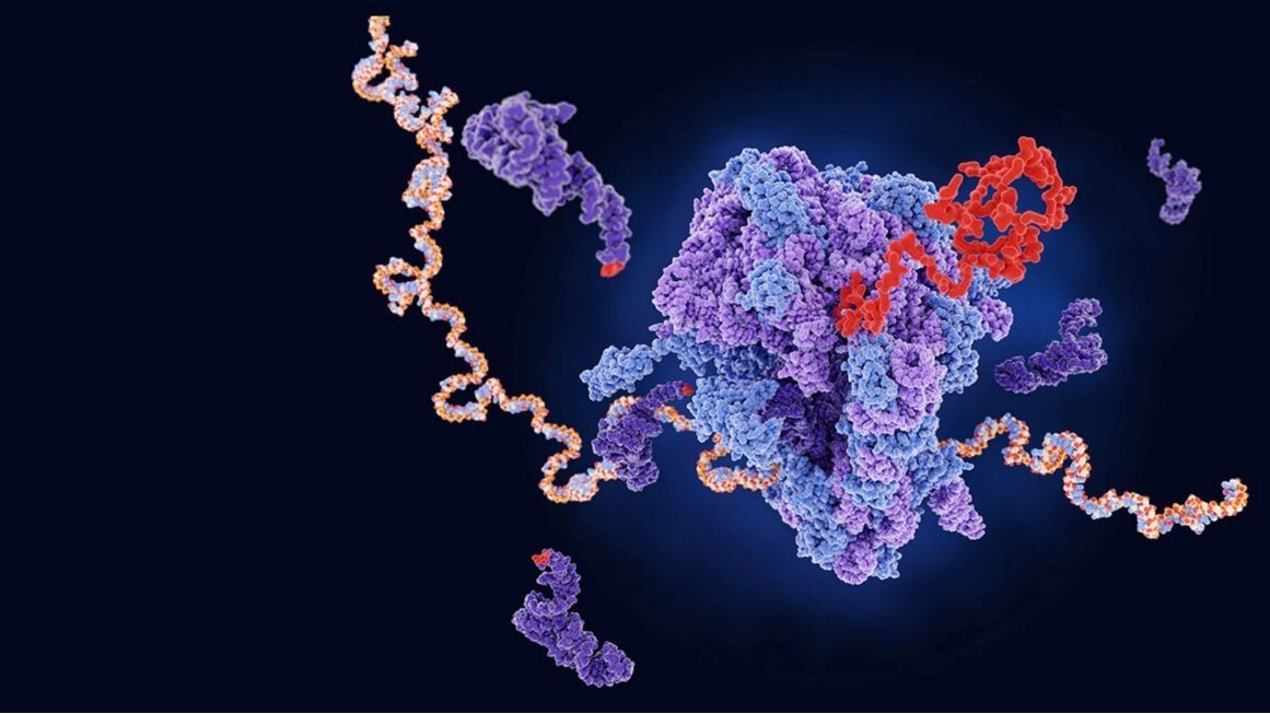 Photo_ Illustration of a ribosome producing a protein from an mRNA template; Juan Gaertner_Science Photo Library_Getty