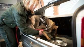 drug-dog-Newscom