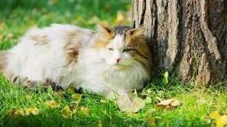 outdoorcat_1161x653
