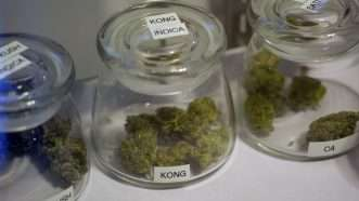 pot-jars-Newscom