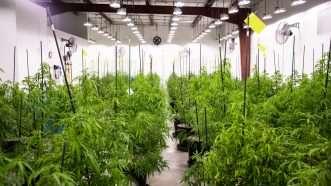 CTPharma-plants