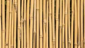 bamboocanes_1161x653