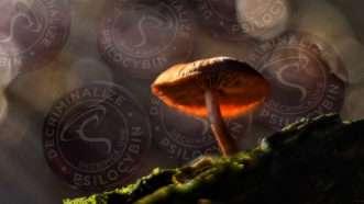 Mushrooms_ss