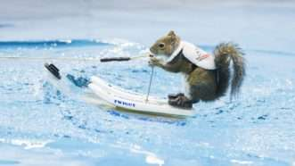 waterskiingsquirrel_1161x653