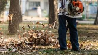 leafblower_1161x653