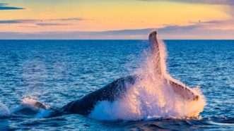 whale_1161x653