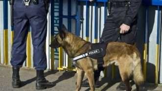 policedog_1161x653