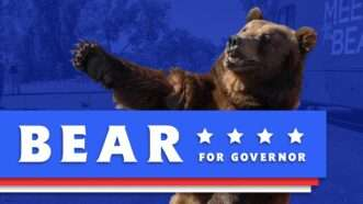 Bear_YT