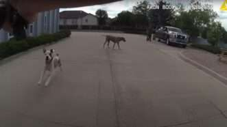 loveland-dog-shooting