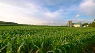 reason-corn