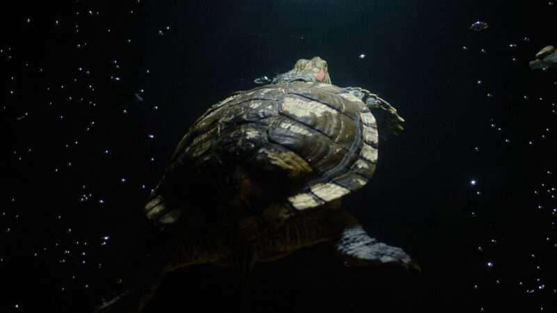 reason-turtle