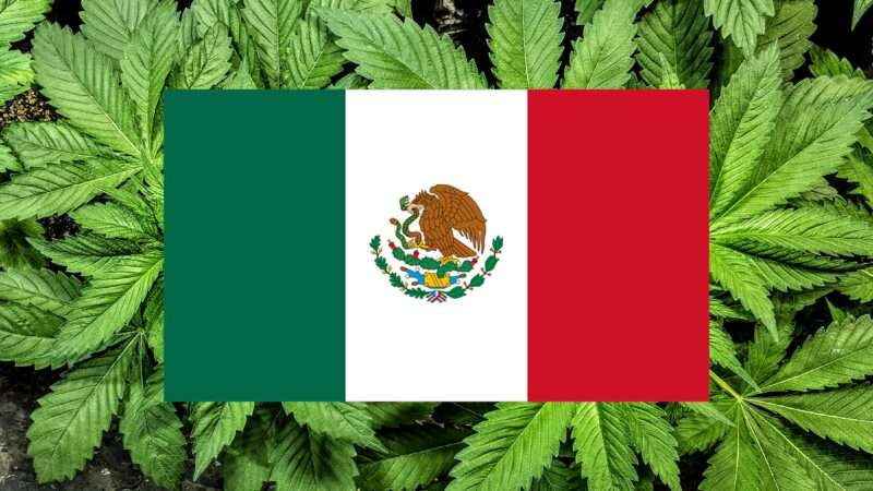 Mexican-flag-on-cannabis-leaves-2