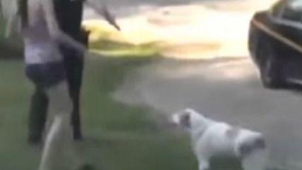 dog rape woman