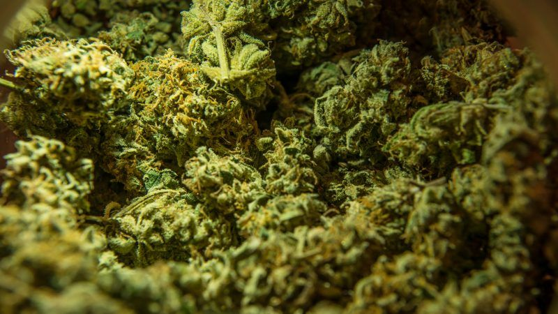 reason-marijuana