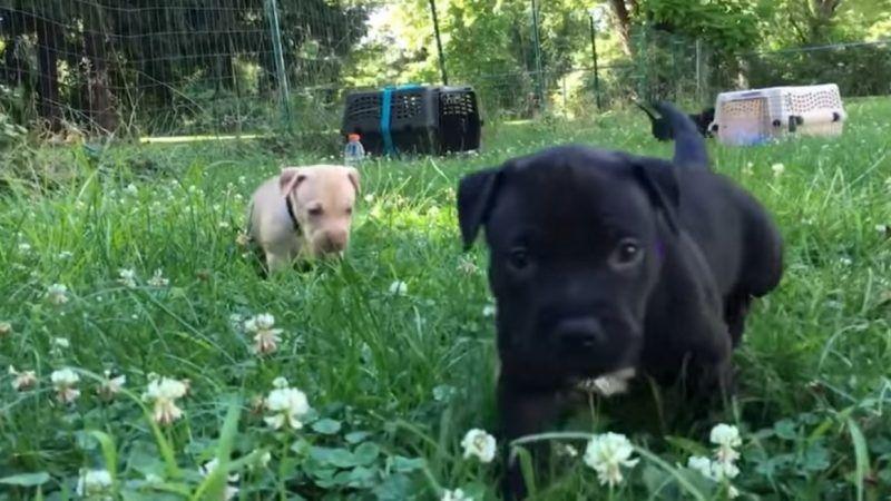 Puppies2_1161x653