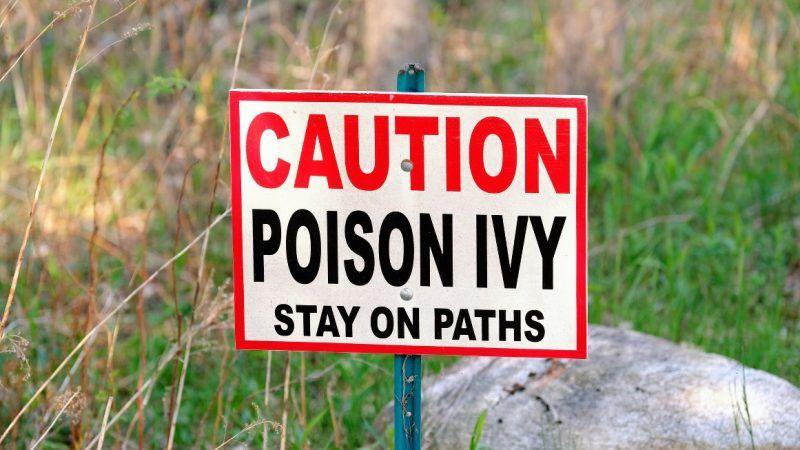poisonivy_1161x653