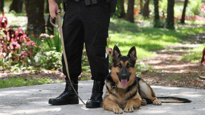 policedogAustralia_1161x653