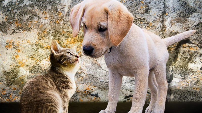 puppy-and-kitten-pixabay