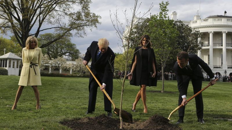 Trump getting a head start on a trillion trees