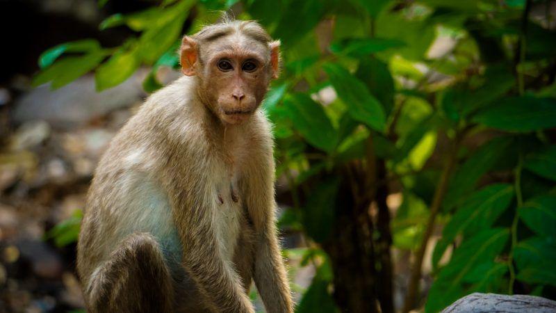 reason-monkey