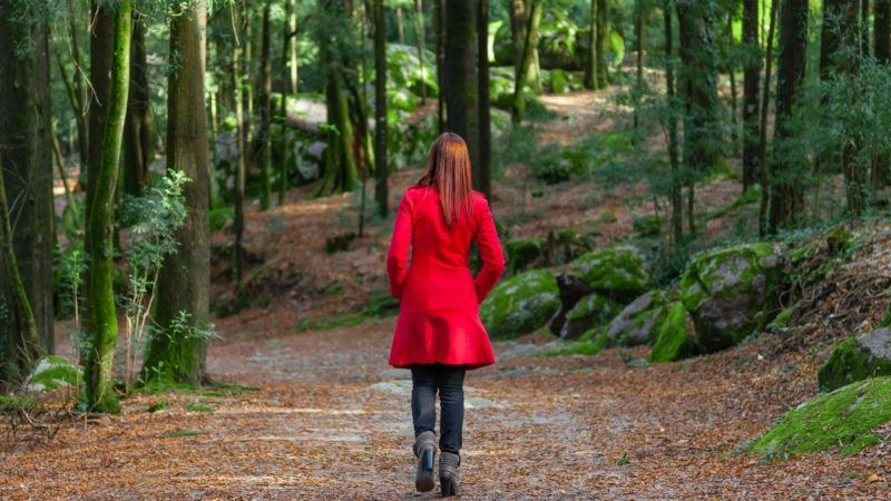 forestwander_1161x653