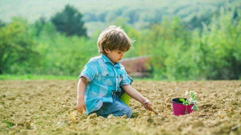 gardening_1161x653