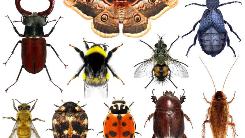 insectspalex66dreamstime