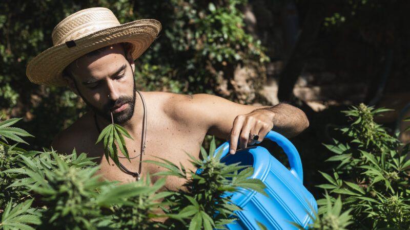 cannabisfarmer