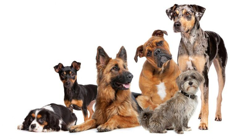 dogs_1161x653
