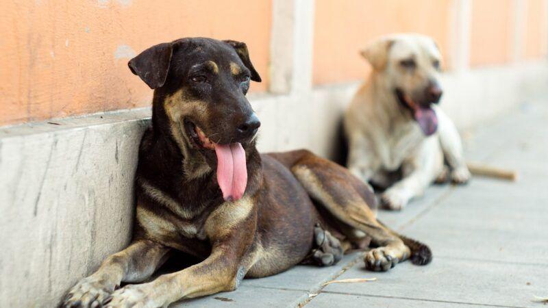 straydogs_1161x653