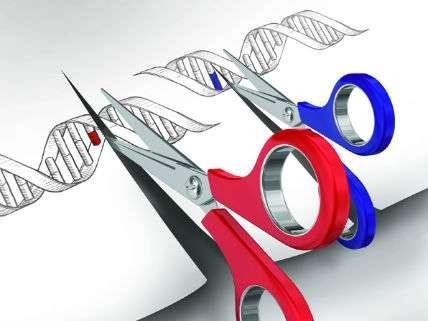 CRISPRScissors