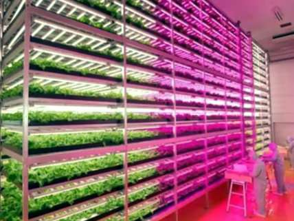 First Farm Run Entirely by Robots to Open in Japan – Reason com