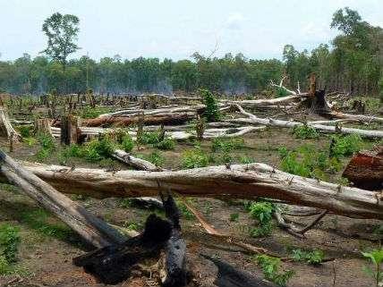 TropicalForestCutTimoRasanenAaltoUniversity