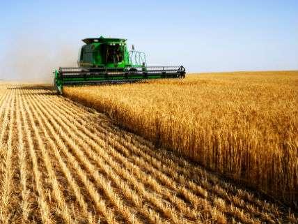 HarvestingOrientalyDreamstime