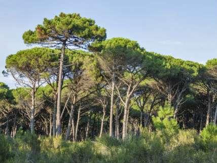 TuscanyForestsSergiyPalamarchukDreamstime