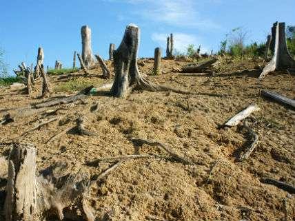 DeforestationVietnamHoxuanhuongDreamstime
