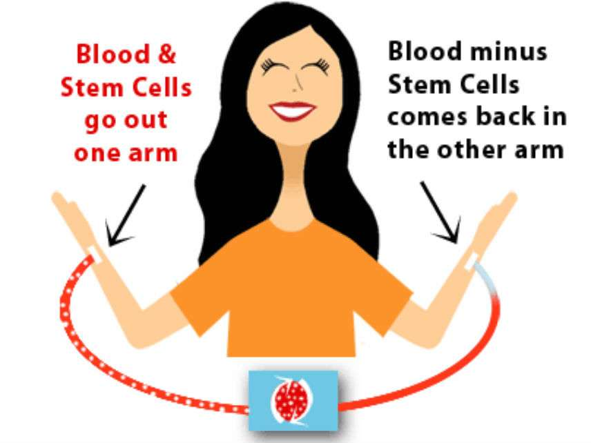 BoneMarrowStemCellsMarrowDrives