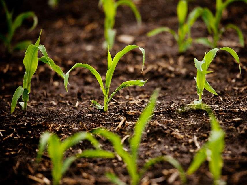 PhotosynthesisBrianStaufferUniversityofIllinois