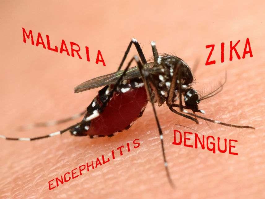 MosquitoBloodsuckingPongmojiDreamstime