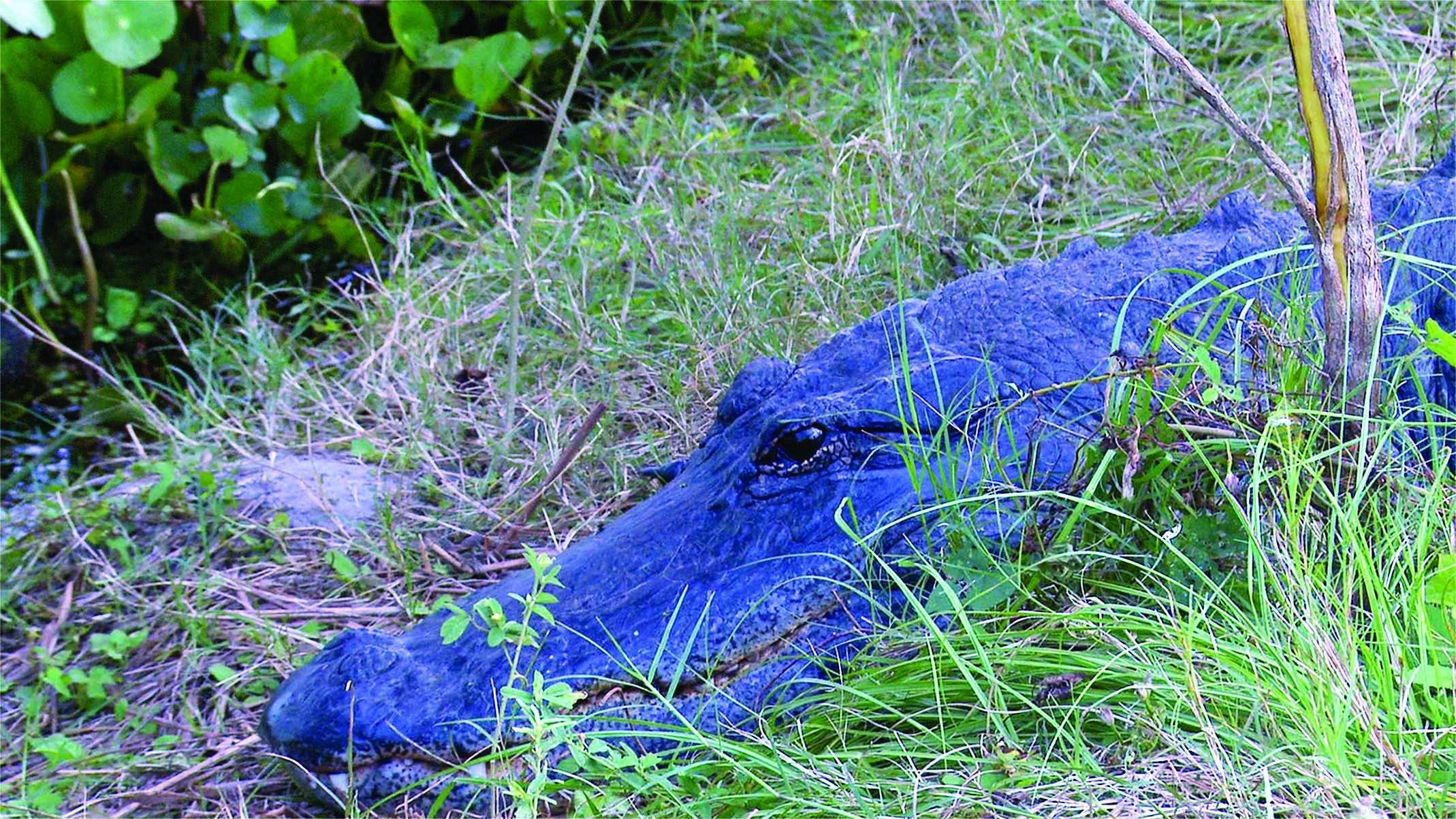 Paynes Prairie Preserve State Park in Gainesville, Florida