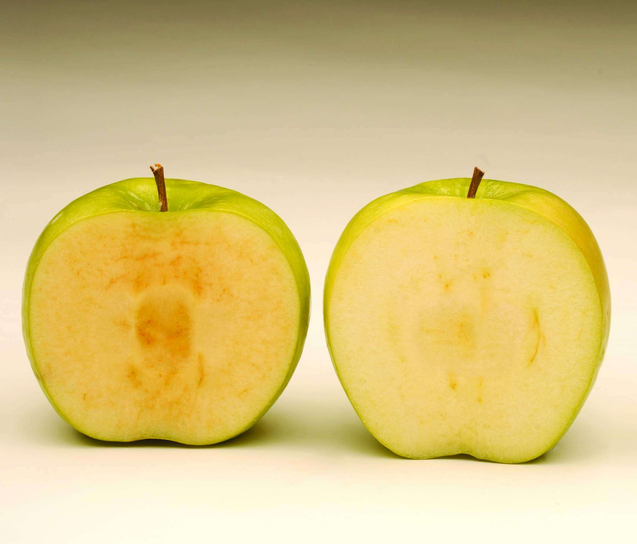 Conventional apple vs. Arctic apple