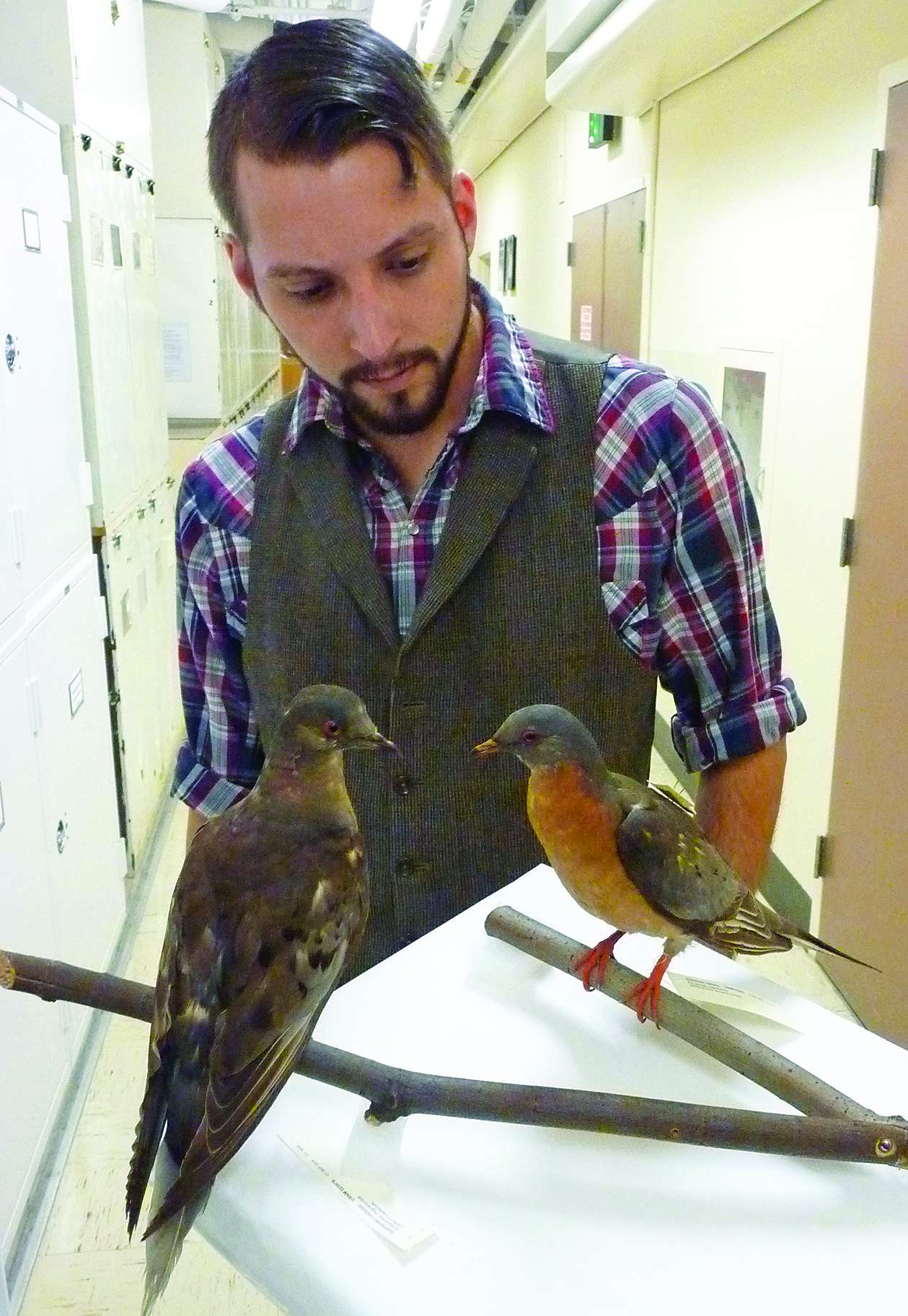Ben Novak and Martha, the last passenger pigeon