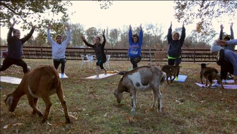 Goat yoga thrives outside of D.C.'s borders