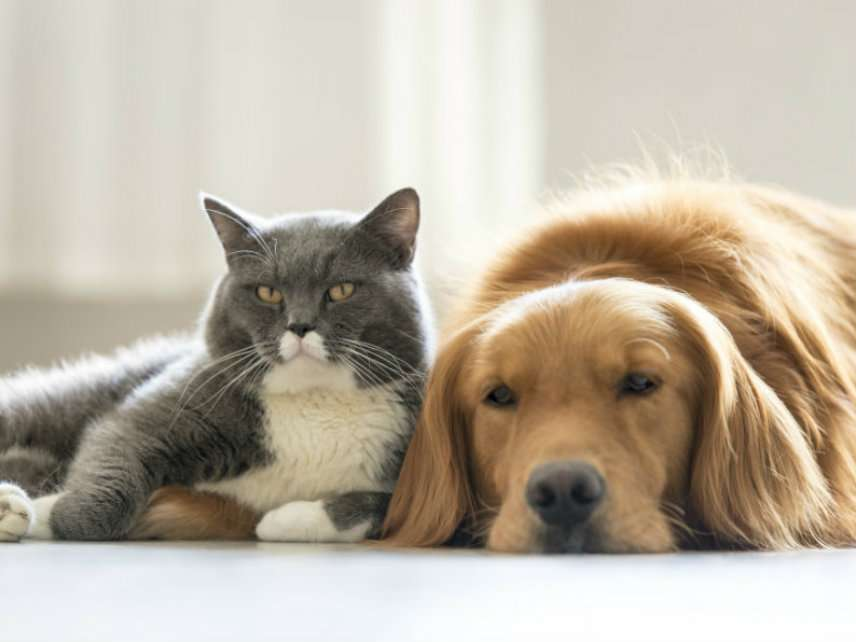 9c65aa16b House Considers Stupid, Unnecessary Bill Making It Illegal to Kill Cats and  Dogs for Food
