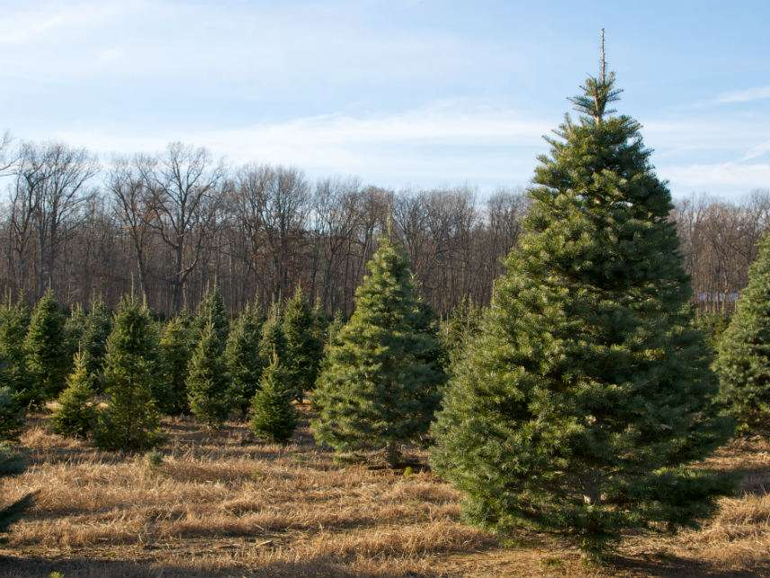 Two Brothers Want To Start A Christmas Tree Farm On Their