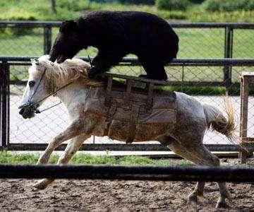 Bear Market Rides to Win!