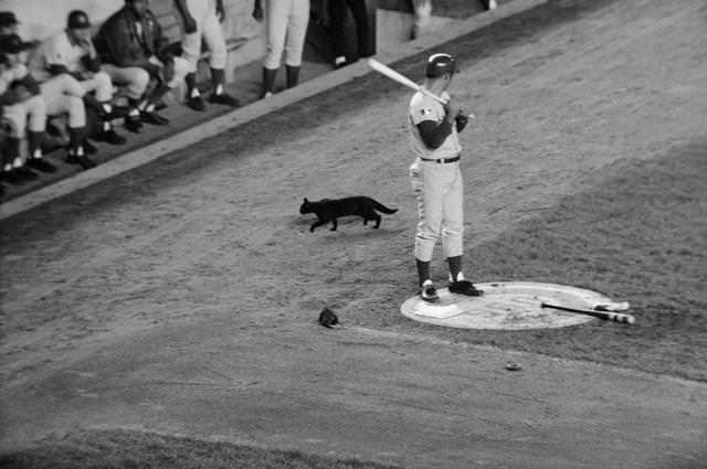 Santo and his black cat, before the collapse.