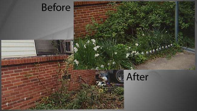 Before and After: Denise Morrison's flower bed