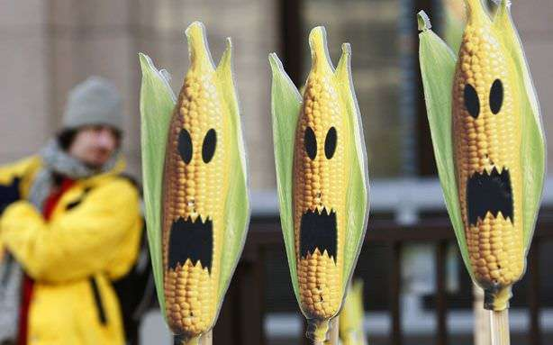Banishing (or at least labeling) GMO corn zombies