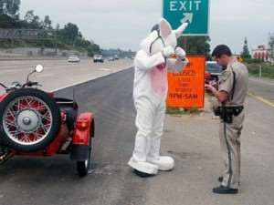 A man dressed up as a giant rabbit was pulled over on a Southland freeway while heading to a charity event for failing to wear a helmet. (credit: California Highway Patrol)